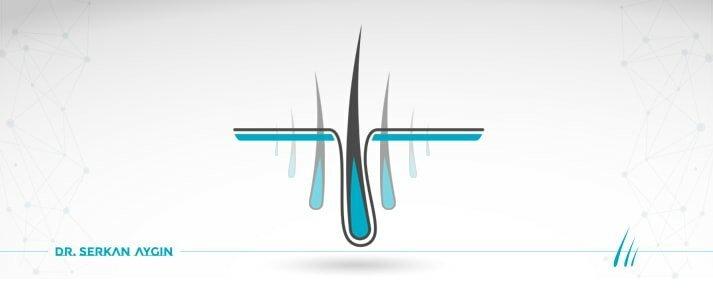Стволови клетки и Клониране на коса